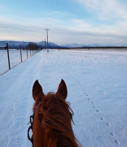Photo Challenge: 5 Horses & Riders Enjoying the Snow