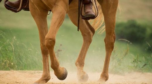 Equality, Diversity & Opportunity In the Equestrian World