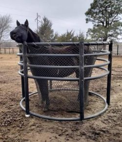 Fact Check Friday: Horse in the Hay Ring