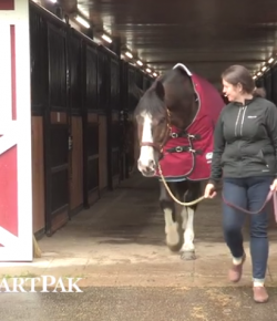 SmartPak Monday Morning Feed: More Blanketing SmartTips