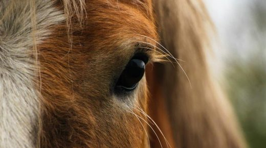 Proposed New Jersey Law Could Add New Safeguard to Horse Auctions