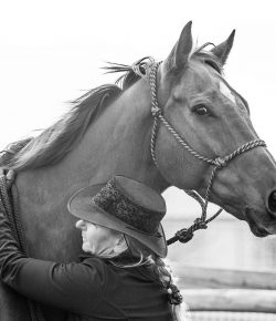 Standing Ovation by Ovation Riding: Horses Without Humans