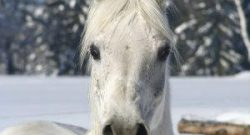 Kentucky Performance Products: Is My Horse Cold?