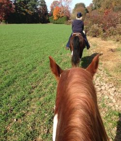 Proposed NH State Law Would Require Manure Removal on Trails