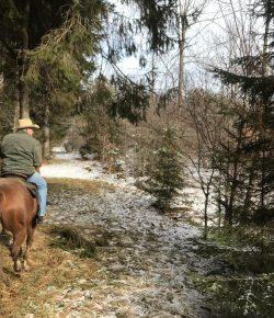 The Academic Equestrian: Senioritis