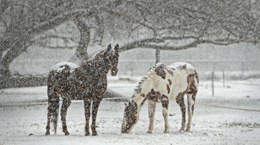 3 Truths About Winter Horsekeeping