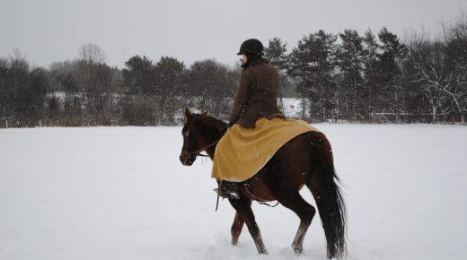 Race Horse to Ranch Horse: Minor Milestones