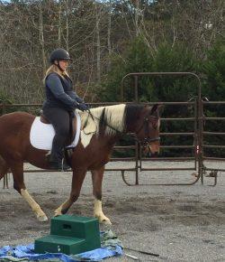 Happy, Healthy & Horsey: Life Regional Championships, Class 1