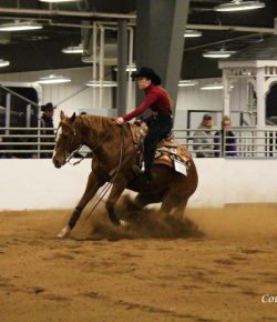 The Academic Equestrian: Horses First in Catch Riding