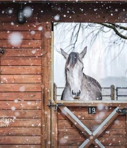 Photo Challenge: 14 Snowflaked Horses, Best in Show