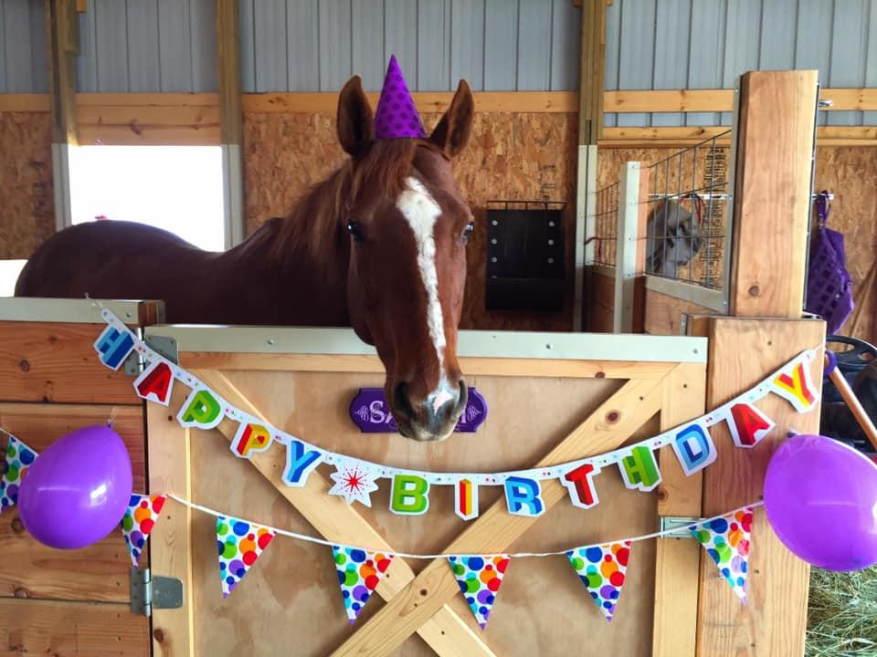 My Mare Sarah On Her 18th Birthday Photo By Elizabeth Moyer