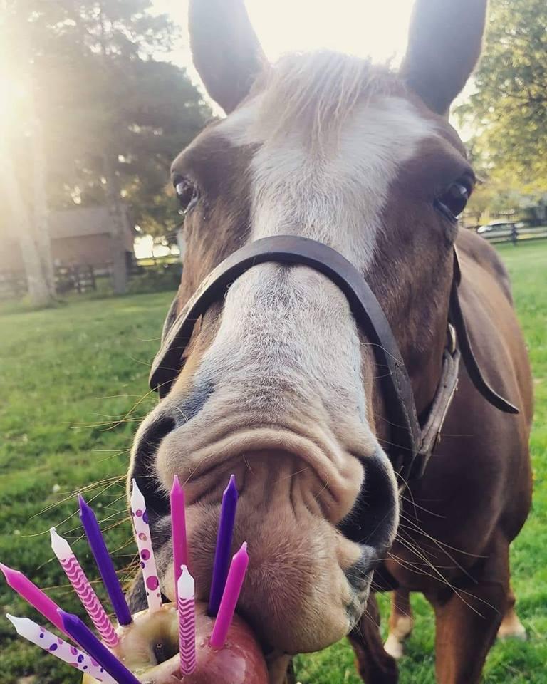 Photo Challenge 18 Horses Celebrating Their Birthday