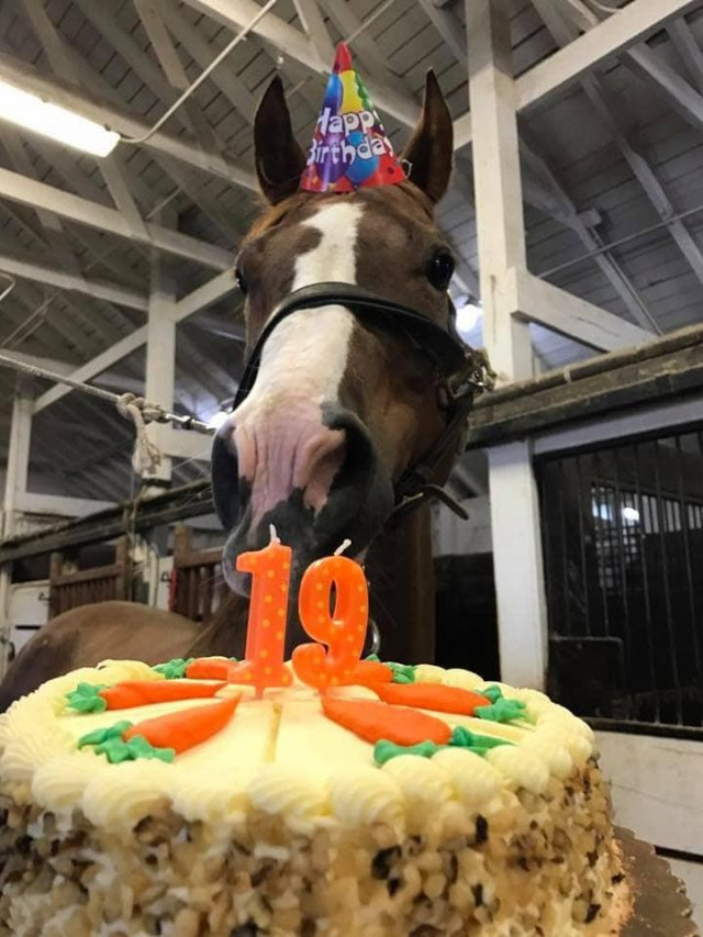 Photo Challenge 18 Horses Celebrating Their Birthday