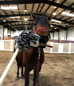 The Academic Equestrian: It's Slide's World