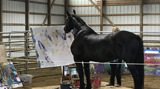 'Unbridled Abstract Expressionistic': Justin the Artistic Horse