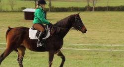 Standing Ovation by Ovation Riding