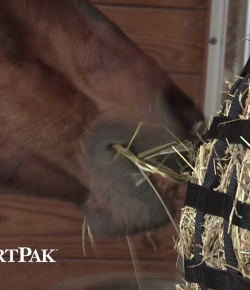 SmartPak Monday Morning Feed: Ask the Vet, March Edition