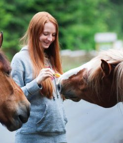 Tips for Those Considering Starting an Equine Therapy Business