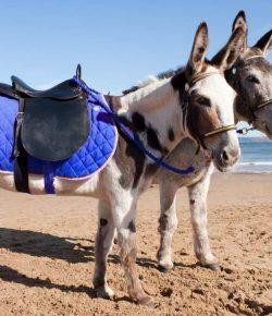 Düber: Donkey Uber Growing In Popularity in the Greek Islands