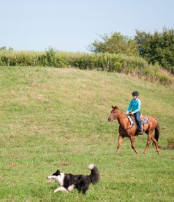 Training Tips for Trail Riding With Dogs