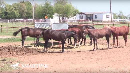Monday Morning Feed by SmartPak: Ask the Vet, April Edition
