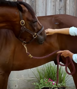 Best of JN: 10 Stretches For Horse & Rider