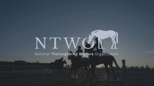 Standing Ovation by Ovation Riding: National Thoroughbred Welfare Organization
