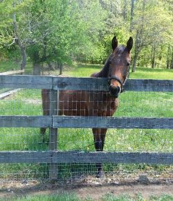 Happy, Healthy, & Horsey: Spring Fever