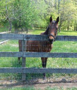 Happy, Healthy, & Horsey: Spring Fever
