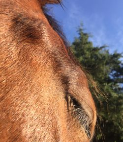 Happy, Healthy, & Horsey: Changing Perspective