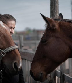 3 New Rules of Success Every Equestrian Should Know
