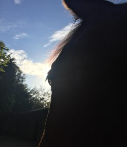 Happy, Healthy, & Horsey: Honoring the Horse