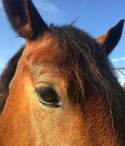 Happy, Healthy, & Horsey: Creating More Bend (in Me!)