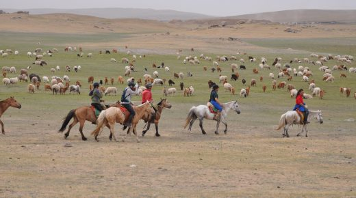 Standing Ovation by Ovation Riding: The Gobi Gallop