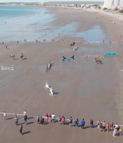 Thursday Video: Horse Show on the Beach