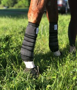Choosing the Best Leg Protection for Your Horse, Presented by Draper Therapies