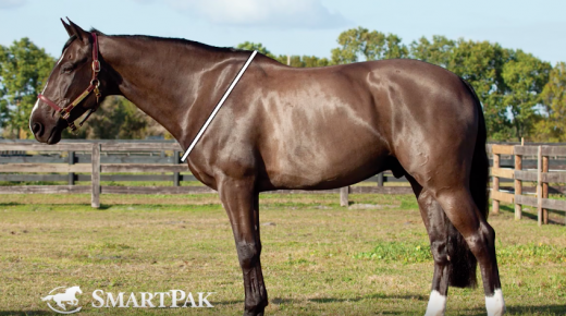 SmartPak Monday Morning Feed: Ask the Vet, June Edition