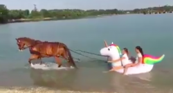 Total Saddle Fit Tuesday: Floating on a Unicorn Pulled by a Horse