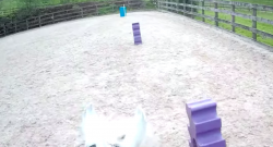 World Equestrian Brands Helmet Cam: Pony Party!