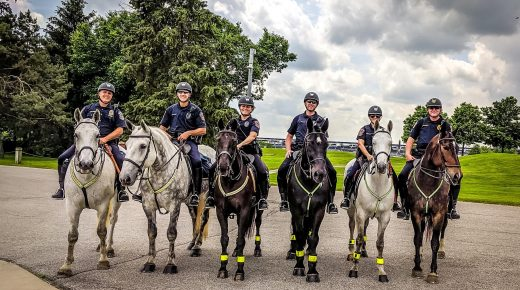 Buzz the Police Horse: Educating People About Mounted Patrol One Fan At A Time