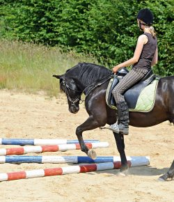 Activate Your Horse's Inside Hind Leg With This Easy Exercise