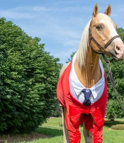 There's a Horse Dressed Up as Mr. Rogers!