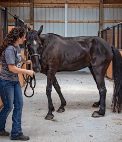 Meet Molly: Journey of an ex-Big Lick Tennessee Walking Horse