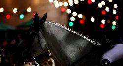 Photo Challenge: 22 Artsy Equine Snapshots