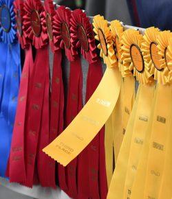 Best of JN: Dear Mean Girls, I Heard You — Addressing Bullying in Equestrian Sports