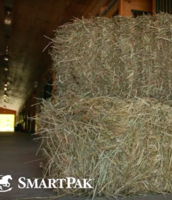 SmartPak Monday Morning Feed: Ask the Equine Nutritionist, Feeding Your New Horse Grain
