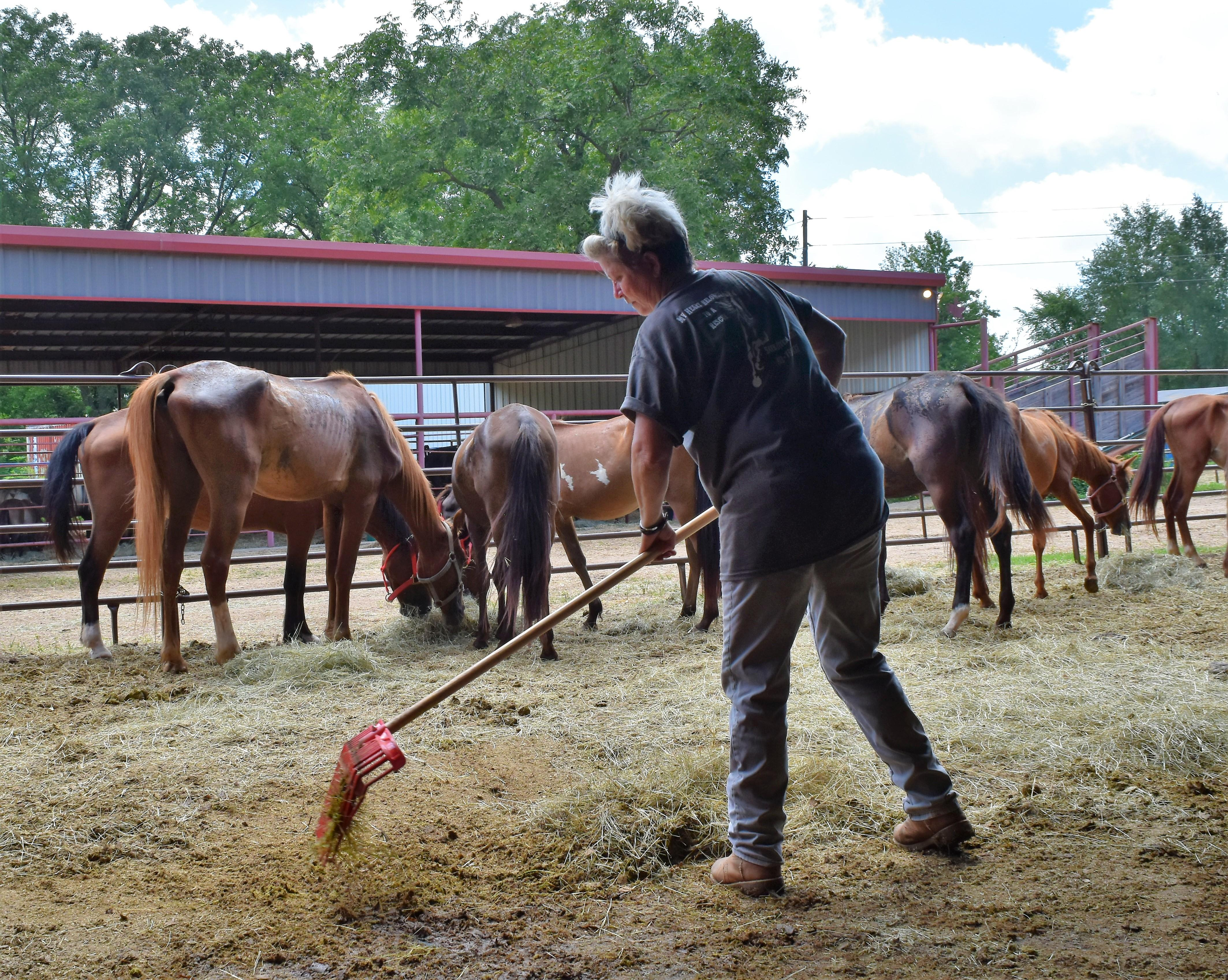 159 Horses Seized From Texas Rescue in June, How Readers Can