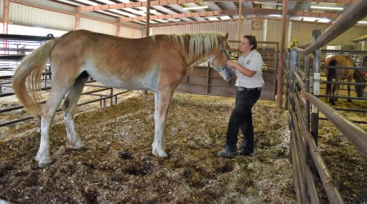 159 Horses Seized From Texas Rescue in June, How Readers Can Help