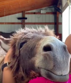 #TGIF, by Flexible Fit Equestrian: One Content Donkey