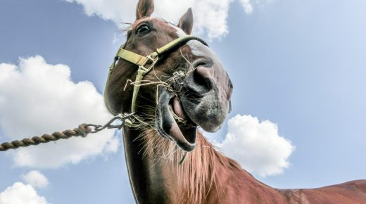 Straight From the Horse's Mouth: Four Urgent Concerns Horses Want You to Know Now!